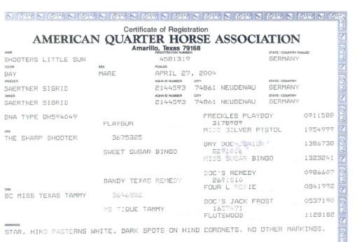 Abstammung, urkunde, American quarter horse